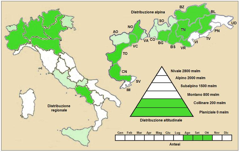 artemisa annua habitat