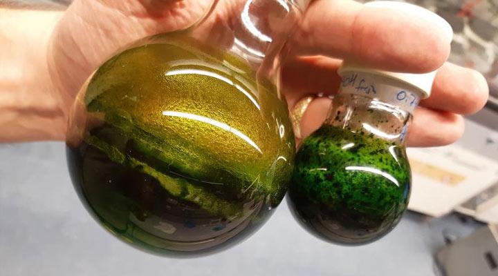 Artemisia annua será probada contra COVID-19