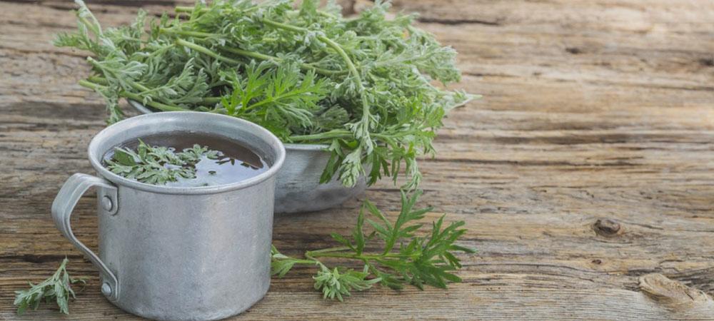 Té de hierbas Artemisia annua: propiedades, usos y dónde comprarlo