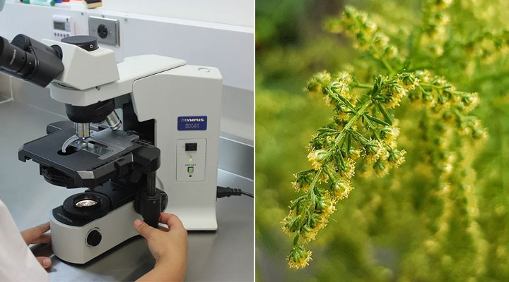 A new study reveals the potential usefulness of Artemisia annua extract against SARS-CoV-2